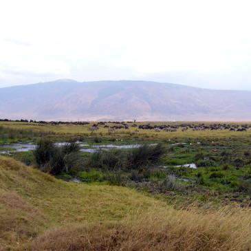 Safari im Ngorongoro Krater