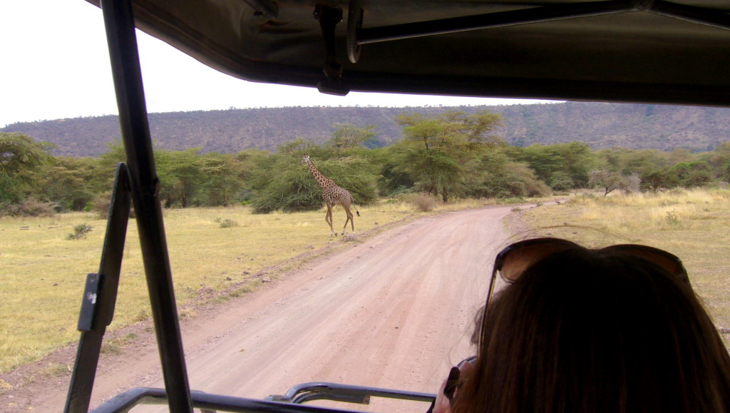 safari_giraffe