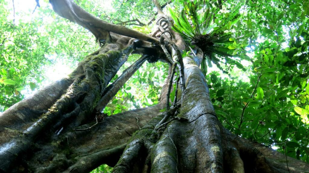 kinabatangan_jungle