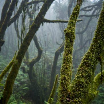 La Gomera – die grüne Insel